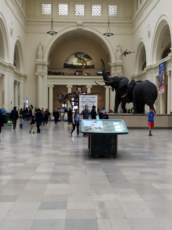 Field Museum // Chicago, IL | Yellow Mondays